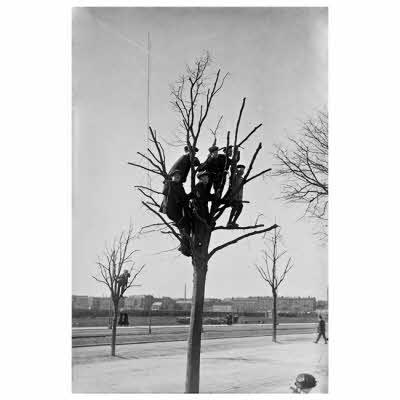 Tilskuer-træ ? Fotograf Holger Damgaard