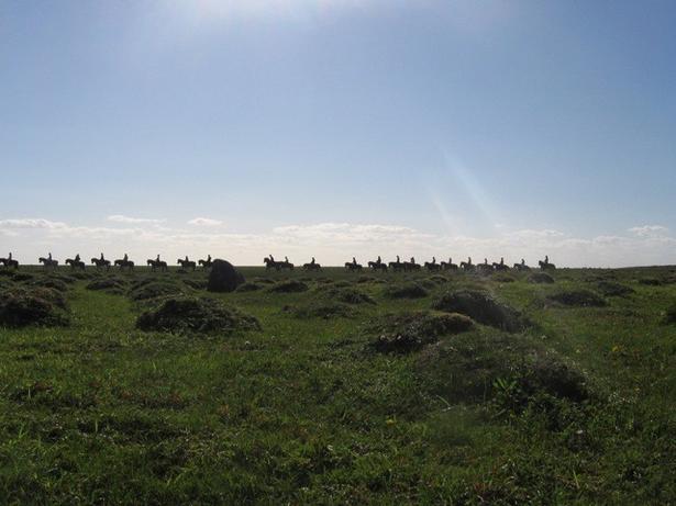 Der er langt til Namibias ørken, men heldigvis kan man se et lignende fænomen i den danske natur, hvor de gule engmyrer laver et lignende mønster i naturen med deres tuer. Her er det på Læsø. (Foto: Aniek Ivens)