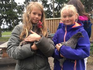 Eleverne flokkes om hønsene på Paradisbakkeskolen i Nexø.