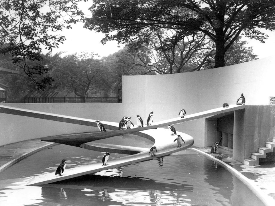 Pingvin-anlægget i London Zoo fra 1934 var Ove Arups første projekt. Foto: ZSL
