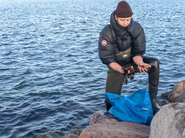 Stillehavsøsters, en invasiv delikatesse for den moderne jæger/samler.