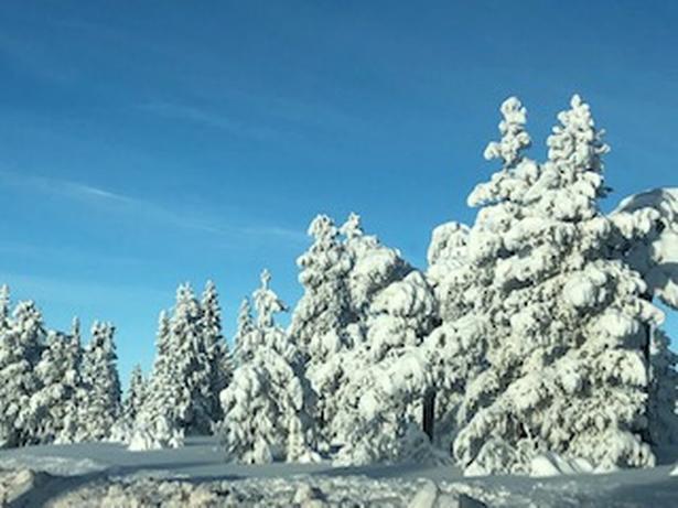 Højfjeldet i Sälen, hvor sne og frost får træerne til at ligne skulpturer.