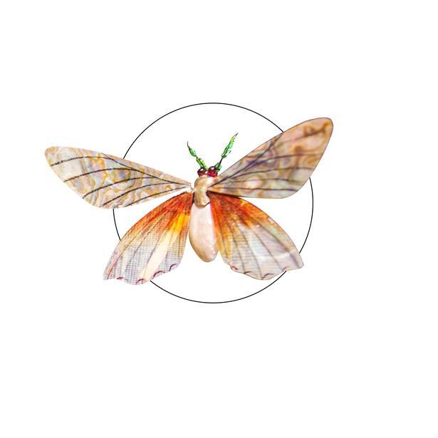 Insekters fine vinger har gennem årene inspireret blandt andet hattemagere i deres arbejde.