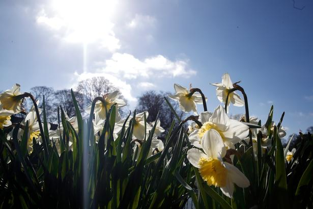 Foråret har sat blomsterne i flor.