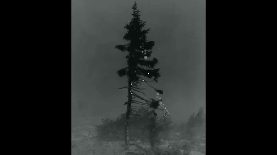 Dansker slæbte en blytung kuffert op på et bjerg, tog ét billede af et ældgammelt træ og trykte det 100 gange - i en bog