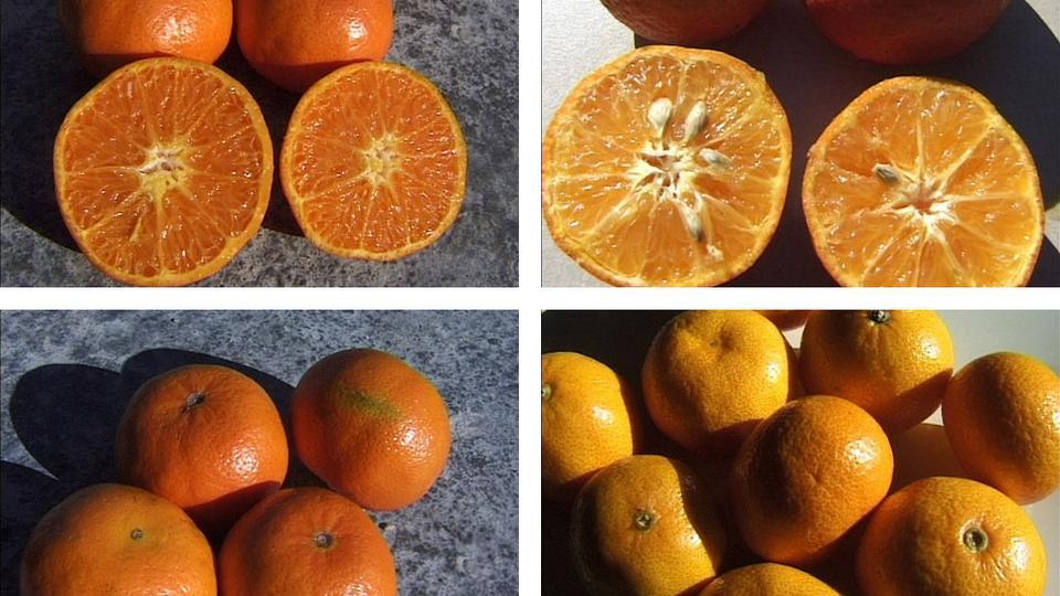 er mandariner sunde