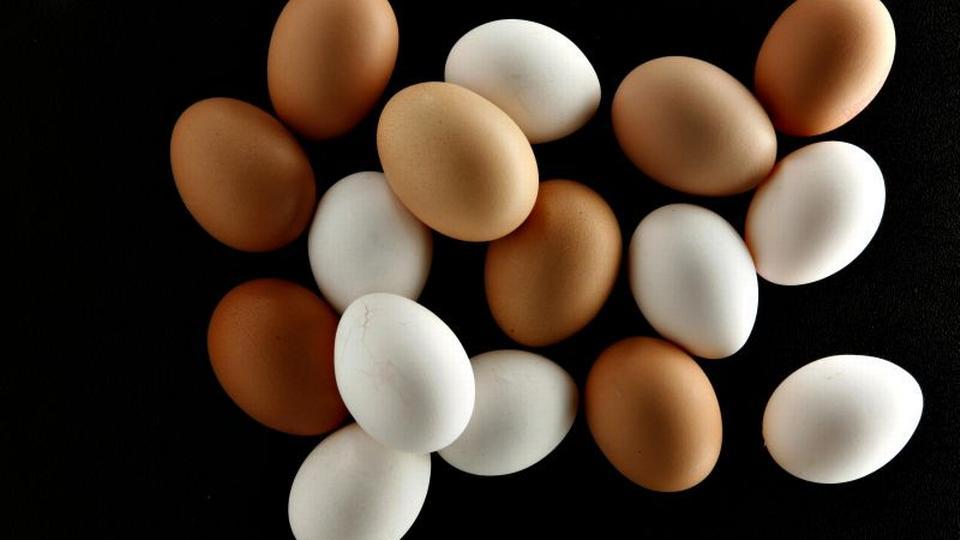 hvor længe spiser befrugtning af et æg