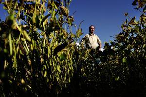 Landbruget i Argentina ved godt, at det er risikabelt at satse alt på kun at dyrke soja til Danmark og andre eksportlande. Men økonomien er så presset, at landmændene dårligt tør prøve andet. Landmand Ignacio Uranga dyrker soja på 8.000 hektar jord.