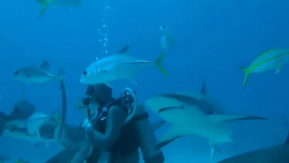 407b8a948a3 I nærkontakt med sultne hajer på Bahamas - politiken.dk
